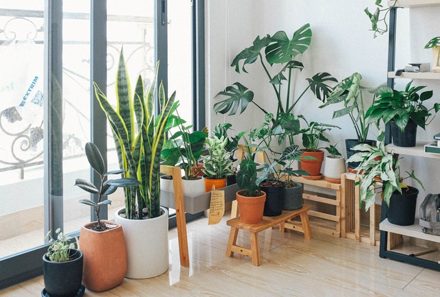 Indoor plants at the window of a bedroom as part of a bedroom makeover on a budget.