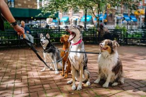 Best Doggy Daycare Centers in Miami